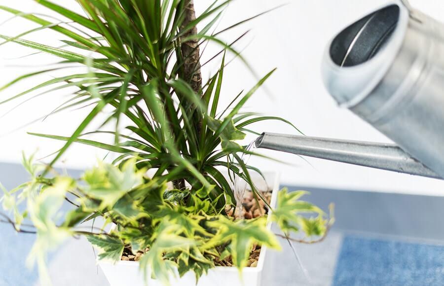 オフィスの観葉植物のお世話も楽しみの一つ